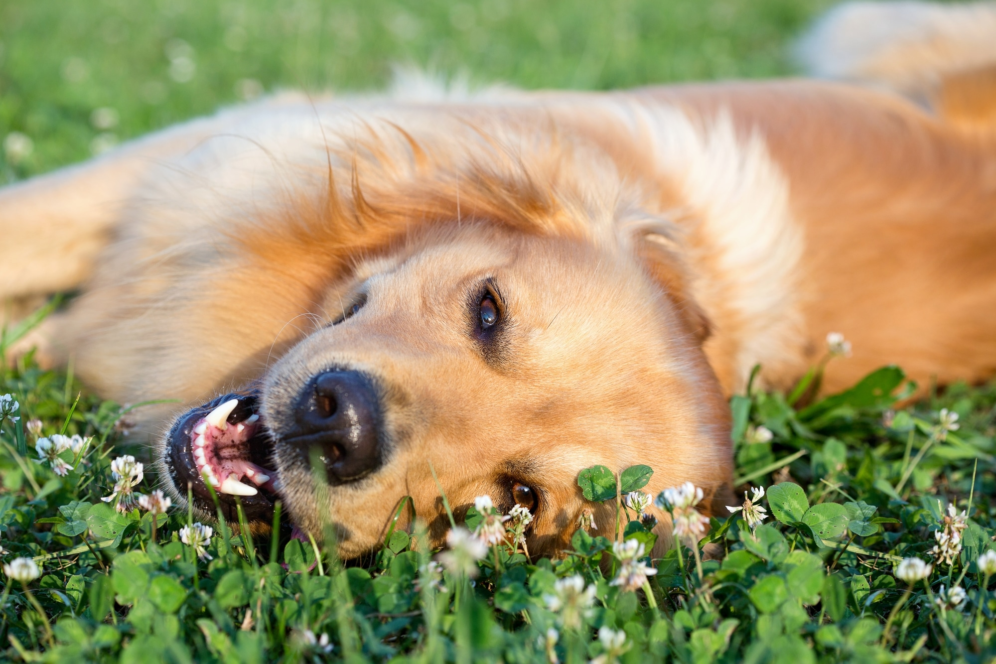 sunapee stays pet policy